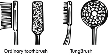 Profile picture of an ordinary toothbrush and a TungBrush